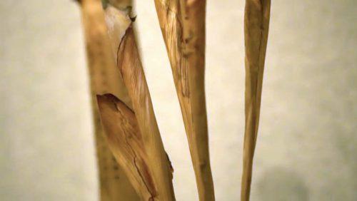 Ke Kuhikuhi by Dianne Ige; Palm sheath, raffia